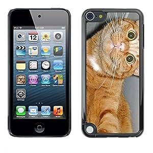 TopCaseStore / la caja del caucho duro de la cubierta de protección de la piel - American Shorthair Feline Cat Happy - Apple iPod Touch 5