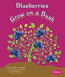 Blueberries Grow on a Bush