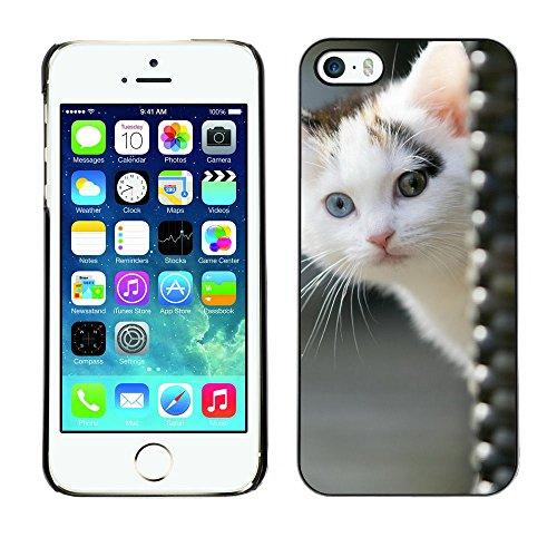 TaiTech / Case Cover Housse Coque étui - White Kitten Blue Green Eye Mongrel Brown - Apple iPhone 5 / 5S