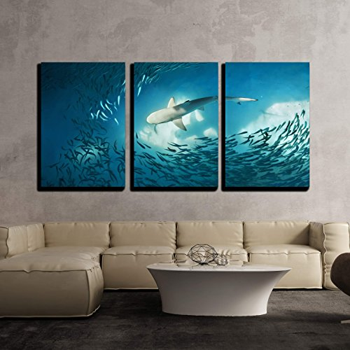 wall26 - 3 Piece Canvas Wall Art - Shark and Small Fishes in Ocean - Nature Background - Modern Home Decor Stretched and Framed Ready to Hang - 16