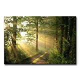 Amazon Price History for:Modern Canvas Painting Wall Art The Picture For Home Decoration Dirt Road Deciduous Forest Green Trees Foggy Morning Spring Landscape Forest Print On Canvas Giclee Artwork For Wall Decor