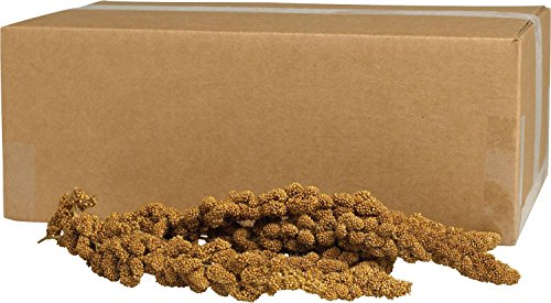 KAYTEE PRODUCTS INC Gold Spray Millet 5 LB