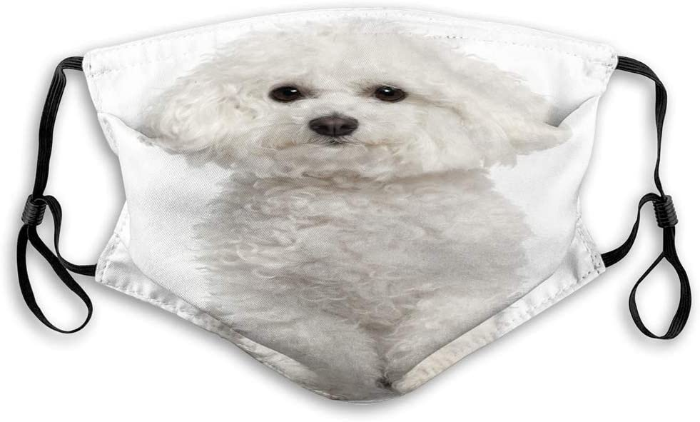 Olive Croft Adjustable Cover Washable Reusable Mouth Face Cover Bichon Frise Years Old Sitting