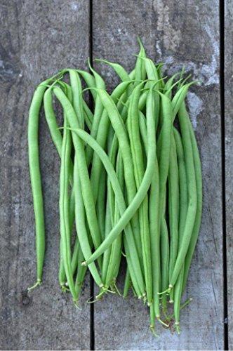 organic-french-bean-argus-phaseolus-vulgaris-l-vegetable-plant-seeds-medium-early-heirloom