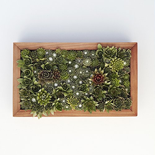 Succulent Gardens Medium Living Picture Planter DIY Kit, 6'' x 12'' Frame, Multicolor by Succulent Gardens (Image #4)