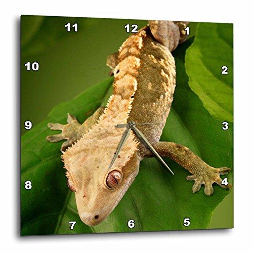 3dRose dpp_84105_1 New Caledonian Crested Gecko lizard - NA02 MPR0086 - Maresa Pryor - Wall Clock, 10 by (Lizard Clock)