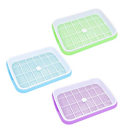 Best Germination Trays