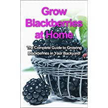 Grow Blackberries at Home: The complete guide to growing blackberries in your backyard!