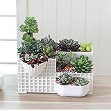 Mecai Small Plant succulent planter large pots Cacti Fairy Garden flower Plants Container 12 inch -milky white