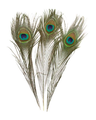 - KAYSO Real Natural Peacock Feathers, 100 Pack