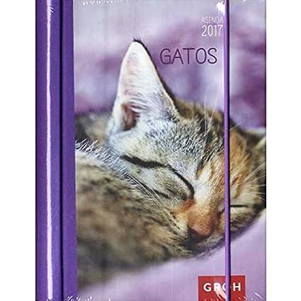 Ediciones Granica Gatos - Agenda 2017: Amazon.es: Oficina y ...