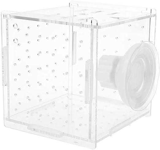 Ncbvixsw - Caja de Aislamiento para cría de Peces de Acuario con Gancho de succión: Amazon.es: Productos para mascotas