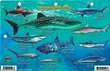 Bahamas Sharks & Rays Franko Maps Laminated Fish Card