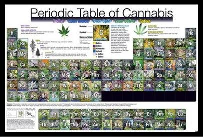 Black Plexi Framed Periodic Table of Cannabis (Weed Marijuana Table) Art Print Poster Wall Decor