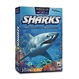 Sharks: An Ultra Realistic 3D Screensaver