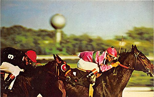 (Aqueduct The Big A, Field Long Old Vintage Horse Racing Postcard Post Card )