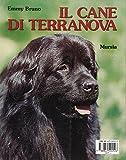 Image de Il cane Terranova