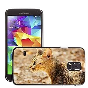 Etui Housse Coque de Protection Cover Rigide pour // M00116031 Gato Animal, Mirar // Samsung Galaxy S5 S V SV i9600 (Not Fits S5 ACTIVE)