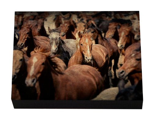 30x40 Professional Metal Shadowbox Wall Portrait Fine Art Western Collection Wild Horses Running into the Mountains