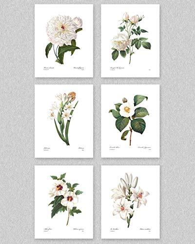 Botanical Prints (Redoute Flower Wall Art, Winter White Room Decor, Set of 6) - 8x10 Unframed