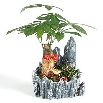 YAOHM Maceta de Plantas Creativas Decorada con Mini Jardín de Hadas ...