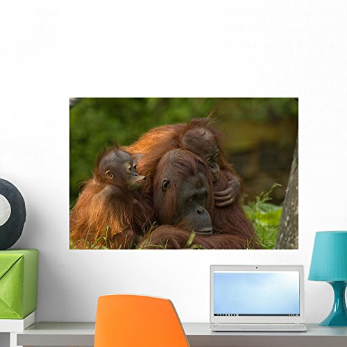 Wallmonkeys WM271712 Mother Orangutan with Her Cute Babies Peel and Stick Wall Decals (24 in W x 16 in H), Medium