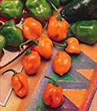 Habanero Pepper - 100 Seeds - GARDEN FRESH PACK!