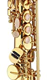 Kaizer Reliable Student Soprano Saxophone 1000 Series Standard Straight B Flat Bb in Gold Lacquer with Include Accessories