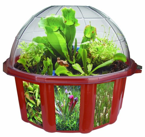 Venus Fly Trap Terrarium - DuneCraft Dome Terrariums - Carnivorous Plants