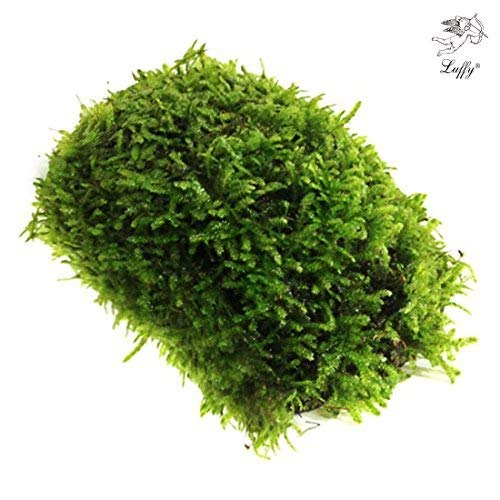 Luffy All Natural Moss - Beautiful Aquatic Decor Safe for Freshwater Fish Tanks - Fun and Playful Aquarium Toy for Betta, Tetra, Gourami & Shrimp to Swim Around & Hide (Coco Moss (1 Pack))