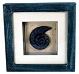StealStreet LHE-788 Ss-Ug-Lhe-788, 6'' Nautilus Aquatic Life Shadowbox Decorative Frame, Blue
