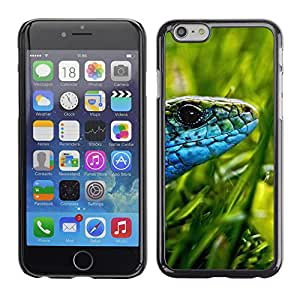 Qstar Arte & diseño plástico duro Fundas Cover Cubre Hard Case Cover para Apple (5.5 inches !!!) iPhone 6 Plus ( Lizard Green Grass Sun Blue Snake)