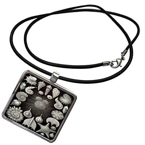 Shell Rectangle Pendant - 3dRose Made in The Highlands - Art- Seashells - Intricate Illustration of sea Shells - Necklace with Rectangle Pendant (ncl_307844_1)
