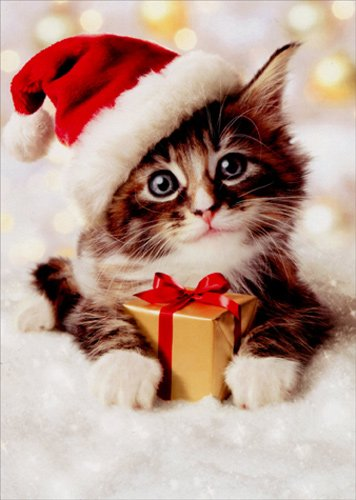 Precious Kitten With Santa Hat - Avanti Christmas Card - Precious Portraits
