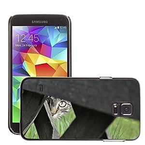 Cas Coq Case Cover // M00147836 Gato Gato doméstico Mascota Gato joven // Samsung Galaxy S5 S V SV i9600 (Not Fits S5 ACTIVE)