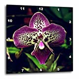 3dRose dpp_182224_1 Close Up View of Purple Orchid Flower Wall Clock, 10 by 10″ Review