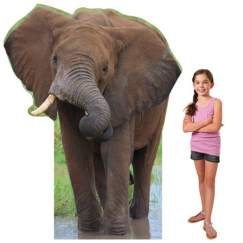 - 6 ft. African Elephant Safari Jungle Standee Standup Photo Booth Prop Background Backdrop Party Decoration Decor Scene Setter Cardboard Cutout