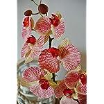 Deutschmade-Artificial-Flower-22-Fake-Creme-Red-Orchid-Phalaenopsis-Arrangement-Including-White-Ceramic-Vase