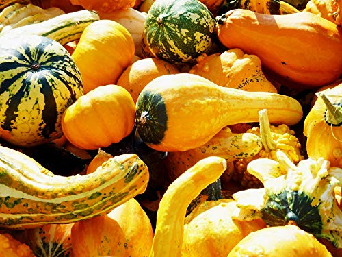 Home Comforts Canvas Print Pumpkin Thanksgiving Delicious Halloween Helloween Vivid Imagery Stretched Canvas 32 x 24 -