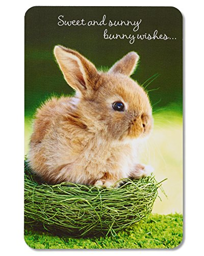 American Greetings Bunny Wishes Easter Card