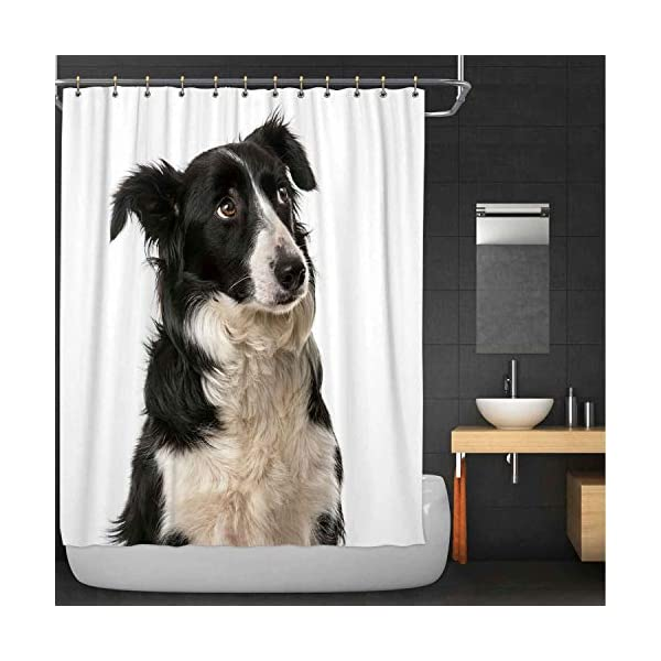 Rongx Close Up of A Border Collie Shower Curtain,113378 for Bathroom,84''W X 72''H 1