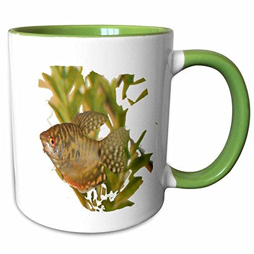 3dRose Susans Zoo Crew Animals Aquatic - Gold Gourami Freshwater Fish With Green - 15oz Two-Tone Green Mug (mug_156243_12)