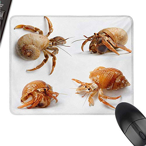 - WSF2019 Crabs Keyboard Mouse pad Sea Animals Theme Hermit Crabs Pattern from Caribbean Seascape Digital Print W8xL9.5(inch)