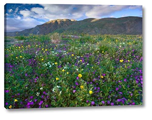 Wildflowers Carpeting The Ground Beneath Coyote Peak, Anza-Borrego Desert, California by Tim Fitzharris - 11