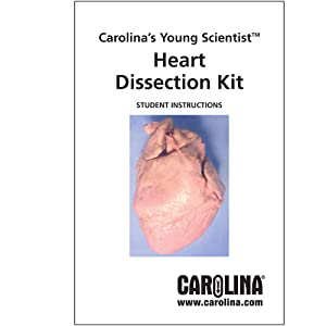 Carolina's Young Scientist Heart Dissection Kit