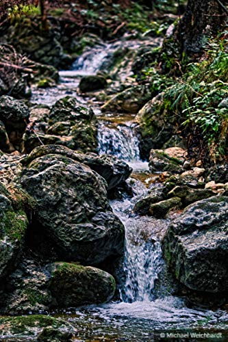 Jungle River Print, Poster of Wild Nature, High Res Photography, Curvy River, Portrait Picture, Little Waterfall, Bushes in Wild Forest ()