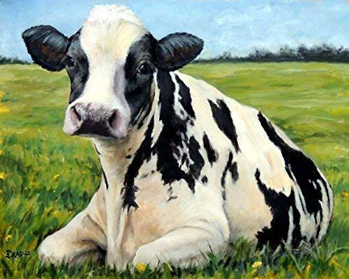 Amazon Com Cow Art Print Holstein Cow Black With White Cow On
