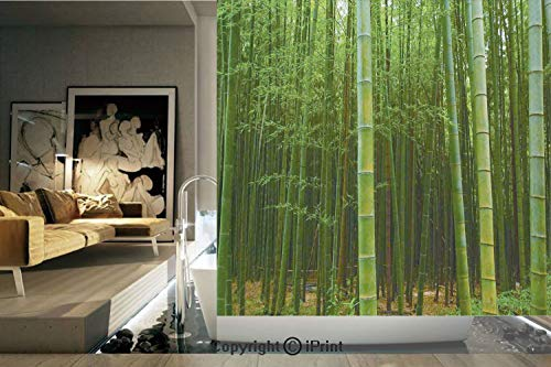 Decorative Privacy Window Film/Bamboo Forest Exotic Fresh Jungle Vision with Tall Shoots Tropical Wonderland Print Decorative/No-Glue Self Static Cling for Home Bedroom Bathroom Kitchen Office Decor G ()