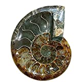 LIXUAN Ammonite Fossil Ashtray Carving Ashtray Natural Iridescent Fossil Ammolite Fossil Mineral Specimen