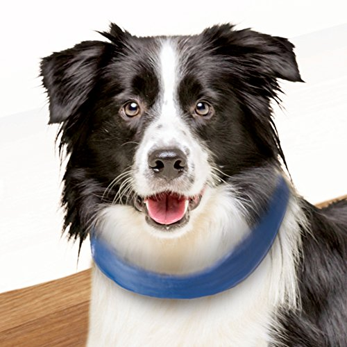dog collar cooling - 6